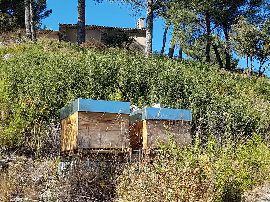 ruche abeille bouc-bel-air maison en bois