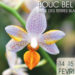 salon internationnal orchidee de bouc-bel-air 13320