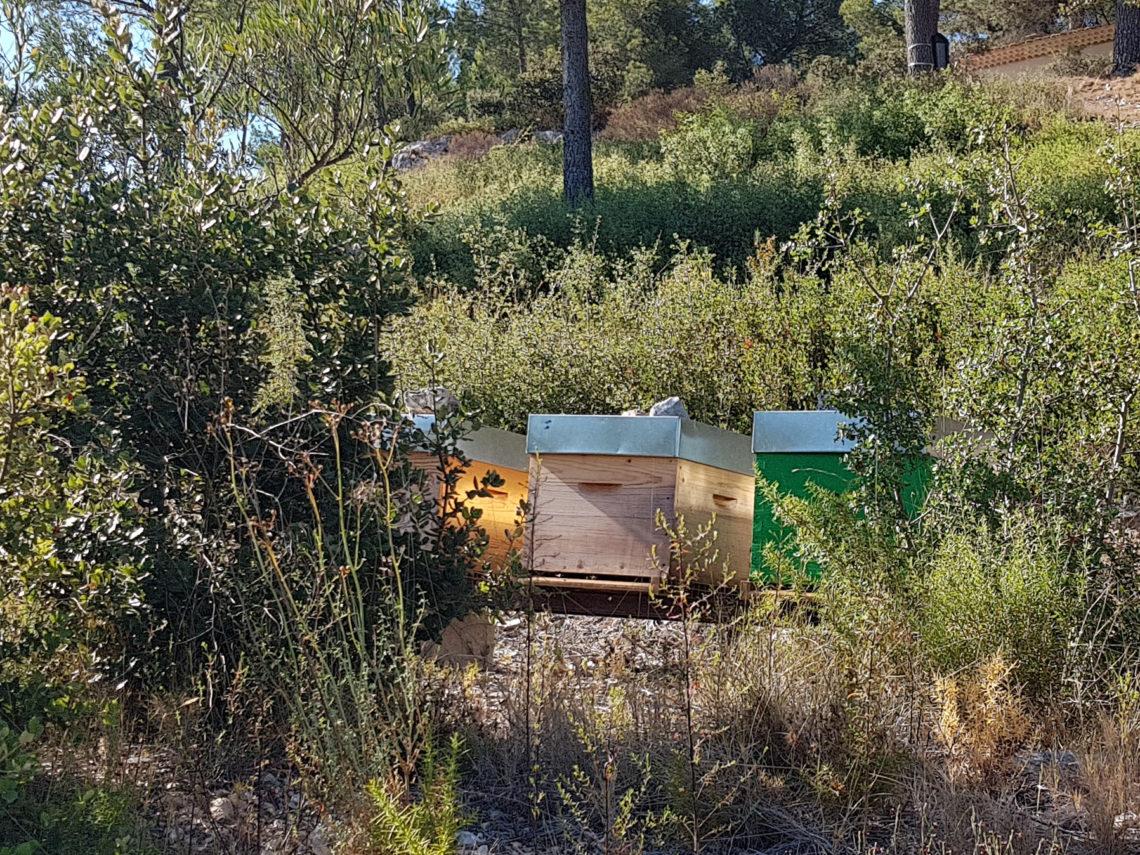ruche abeille bouc-bel-air maison
