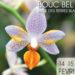 salon internationnal orchidee de bouc-bel-air 13320